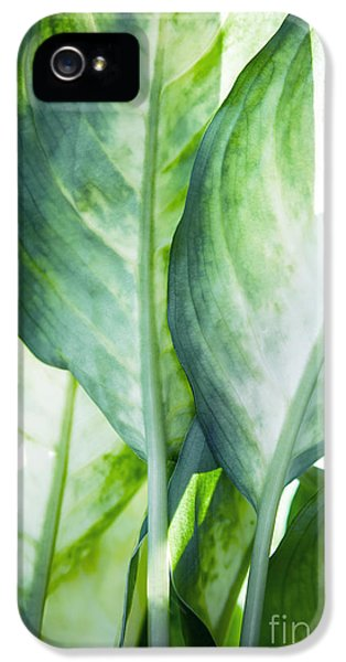 Tropic Abstract  IPhone 5 Case by Mark Ashkenazi