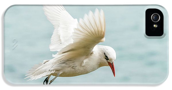 Tropic Bird 4 IPhone 5 Case