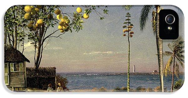 Tropical Scene IPhone 5 / 5s Case by Albert Bierstadt