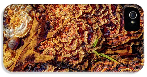 Turkey Tail Mushrooms  IPhone 5 Case