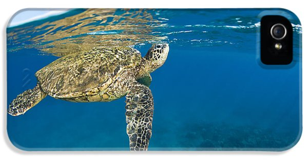 Breathe iPhone 5 Case - Turtle Taking A Breath by Dave Fleetham - Printscapes