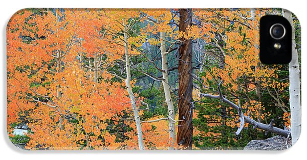 IPhone 5 Case featuring the photograph Twisted Pine by David Chandler