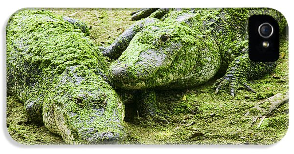 Two Alligators IPhone 5 Case by Garry Gay