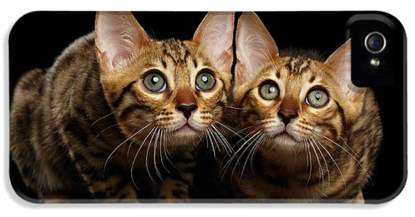 Two Bengal Kitty Looking In Camera On Black IPhone 5 Case by Sergey Taran