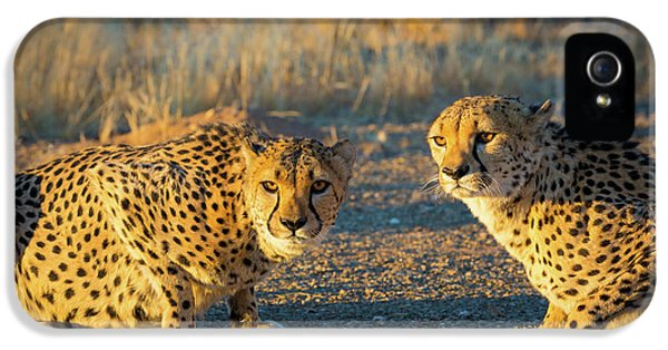 Two Cheetahs IPhone 5 / 5s Case by Inge Johnsson