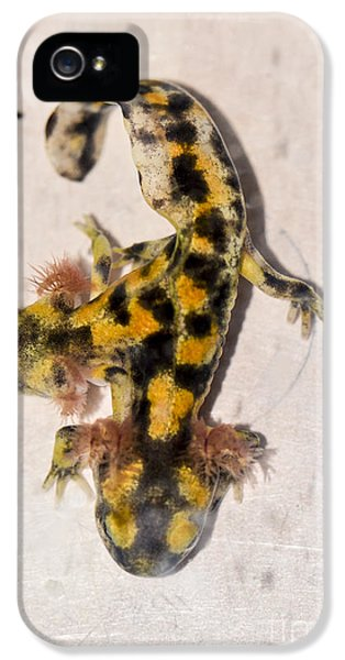 Two-headed Near Eastern Fire Salamande IPhone 5 / 5s Case by Shay Levy