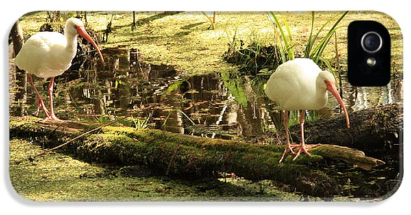 Two Ibises On A Log IPhone 5 / 5s Case by Carol Groenen