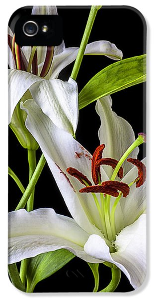 Stamens iPhone 5 Case - Two Wonderful Lilies  by Garry Gay
