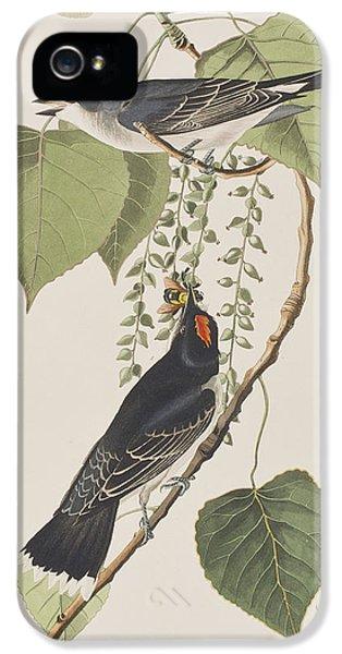 Tyrant Fly Catcher IPhone 5 Case by John James Audubon