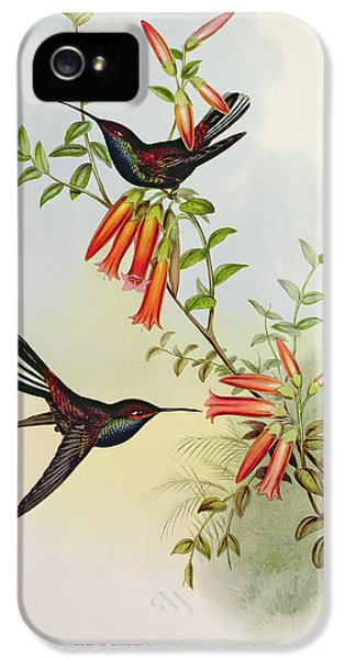 Urochroa Bougieri IPhone 5 Case by John Gould