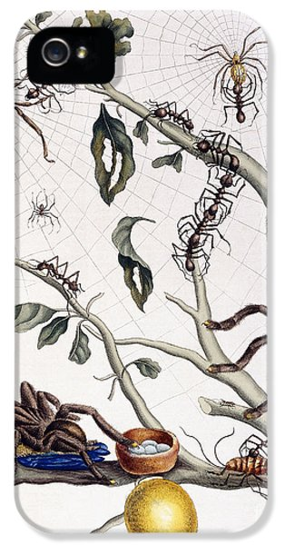 Various Arachnids From South America, 1726  IPhone 5 Case