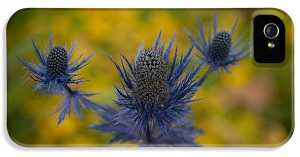 Vibrant Thistles IPhone 5 Case