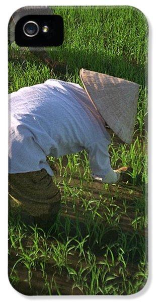 Vietnam Paddy Fields IPhone 5 Case
