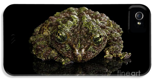 Vietnamese Mossy Frog, Theloderma Corticale Or Tonkin Bug-eyed Frog, Isolated On Black Background IPhone 5 Case