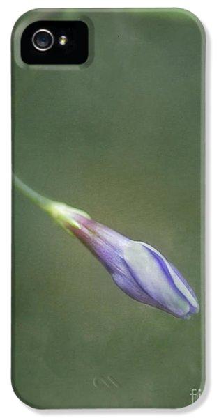 Flowers iPhone 5 Case - Vinca by Priska Wettstein