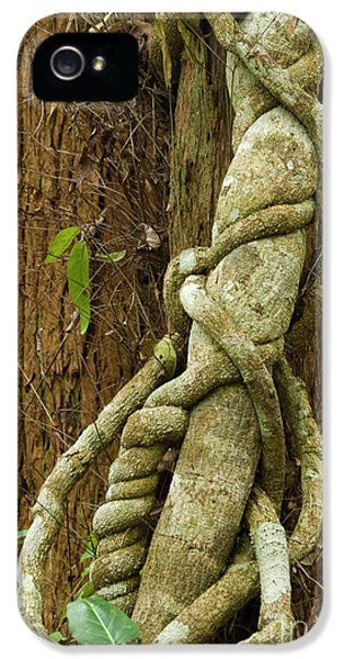 IPhone 5 Case featuring the photograph Vine by Werner Padarin