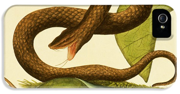 Viper Fusca IPhone 5 Case by Mark Catesby