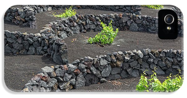 Canary iPhone 5 Case - Volcanic Vineyards by Delphimages Photo Creations