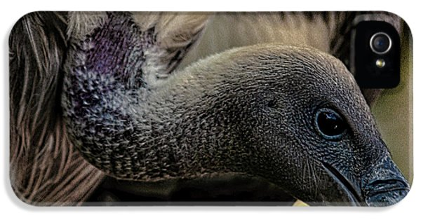 Vulture IPhone 5 Case by Martin Newman