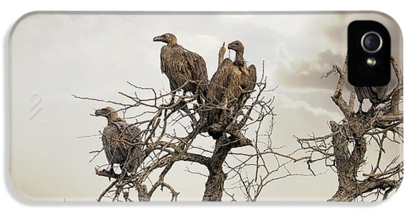 Vultures In A Dead Tree.  IPhone 5 Case by Jane Rix