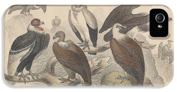 Vultures IPhone 5 Case by Rob Dreyer