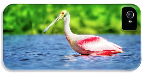 Wading Spoonbill IPhone 5 Case by Mark Andrew Thomas