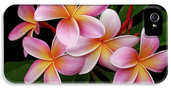 Plumeria Flower iPhone 5 Case - Wailua Sweet Love Texture by Sharon Mau