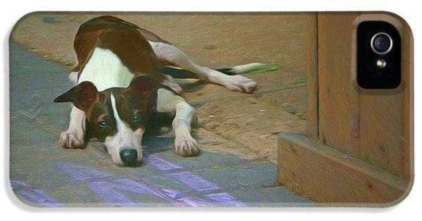 Waiting - Dog IPhone 5 Case