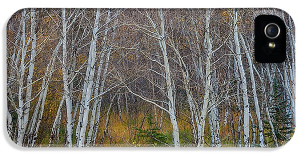 IPhone 5 Case featuring the photograph Walk In The Woods by James BO Insogna