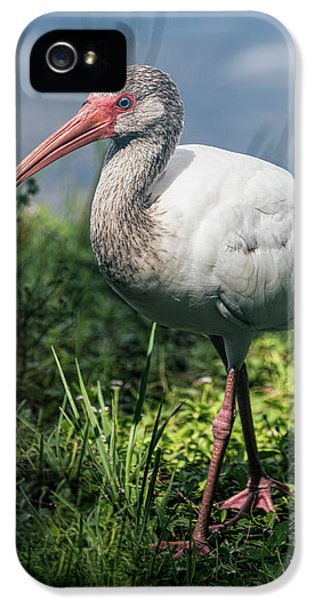 Walk On The Wild Side  IPhone 5 Case by Saija Lehtonen