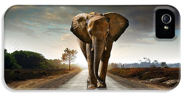 Ecology iPhone 5 Cases - Walking Elephant iPhone 5 Case by Carlos Caetano