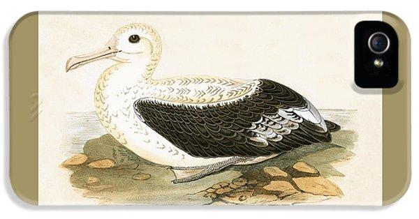 Wandering Albatross IPhone 5 Case