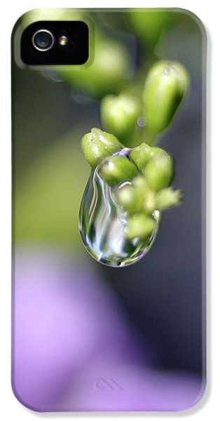 Water Droplet Iv IPhone 5 Case by Richard Rizzo