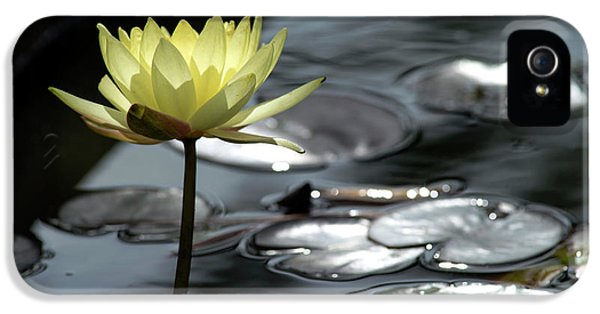 Water Lily And Silver Leaves IPhone 5 Case