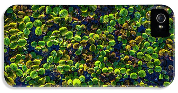 Water Plants IPhone 5 Case by Marvin Spates