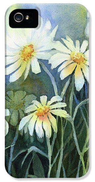 Daisy iPhone 5 Case - Daisies Flowers  by Olga Shvartsur