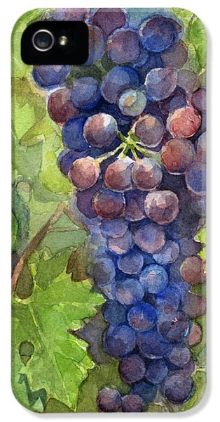 Watercolor Grapes Painting IPhone 5 Case by Olga Shvartsur