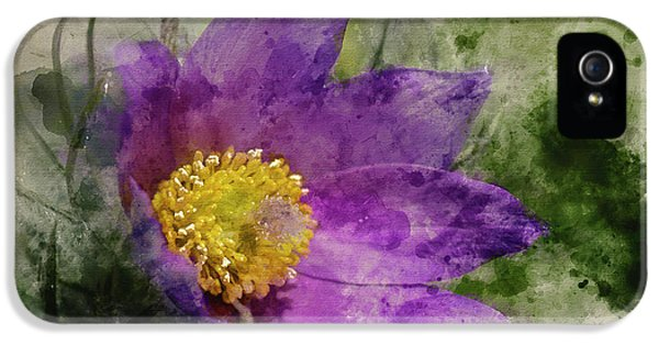 Watercolour Painting Of Pulsatilla Vulgaris Flower In Bloom IPhone 5 Case by Matthew Gibson