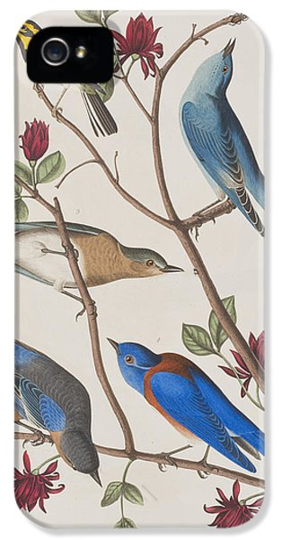 Bluebird iPhone 5 Case - Western Blue-bird by John James Audubon