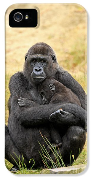 Western Gorilla And Young IPhone 5 Case by Jurgen & Christine Sohns/FLPA