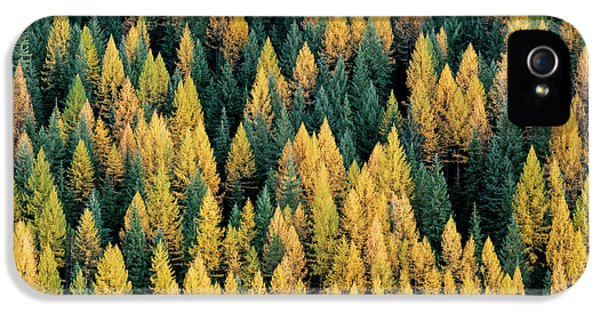 Western Larch Forest IPhone 5 Case by Leland D Howard