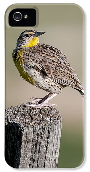 IPhone 5 Case featuring the photograph Western Meadowlark by Gary Lengyel