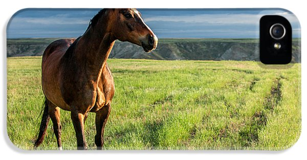 Horse iPhone 5 Case - Western Stallion by Todd Klassy