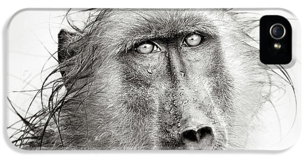 Wet Baboon Portrait IPhone 5 Case by Johan Swanepoel