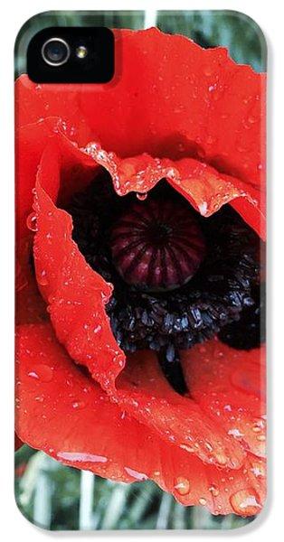 iPhone 5 Case - Wet Poppy by Orphelia Aristal