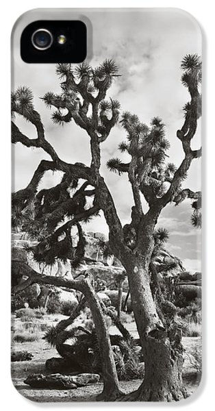 Desert iPhone 5 Case - What I Wouldn't Give Bw by Laurie Search