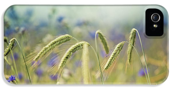 Wheat And Corn Flowers IPhone 5 Case by Nailia Schwarz