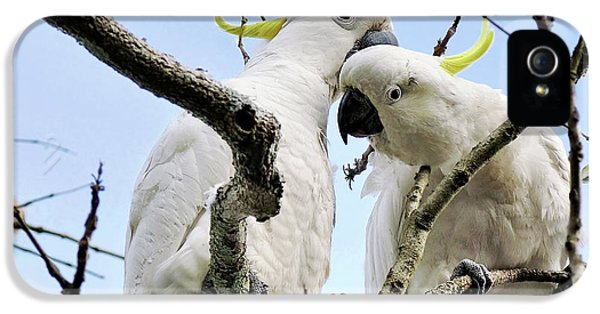 White Cockatoos IPhone 5 / 5s Case by Kaye Menner