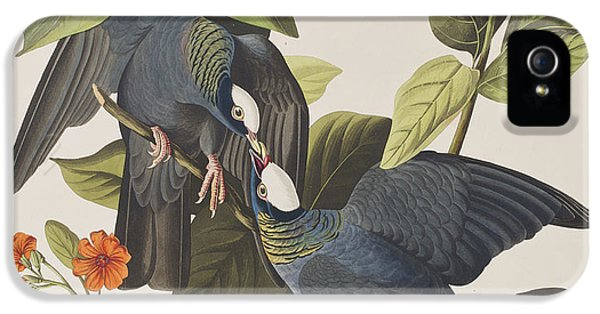 White Crowned Pigeon IPhone 5 / 5s Case by John James Audubon