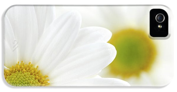 White Daisies IPhone 5 Case by Elena Elisseeva